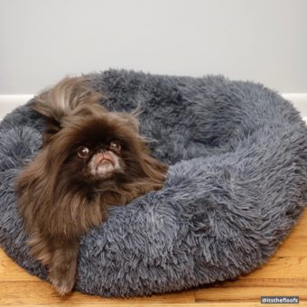 Sure, there's room for another floof in this queen-approved bed from @pup.show, but I'm NOT sharing! 🥰 Use code FLOOF30 to get 30% off one of your own!!