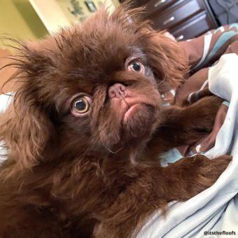 Wayback Wednesday: Puppy glare (2020)